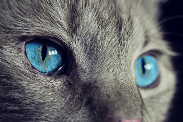 Perchè i gatti vomitano?