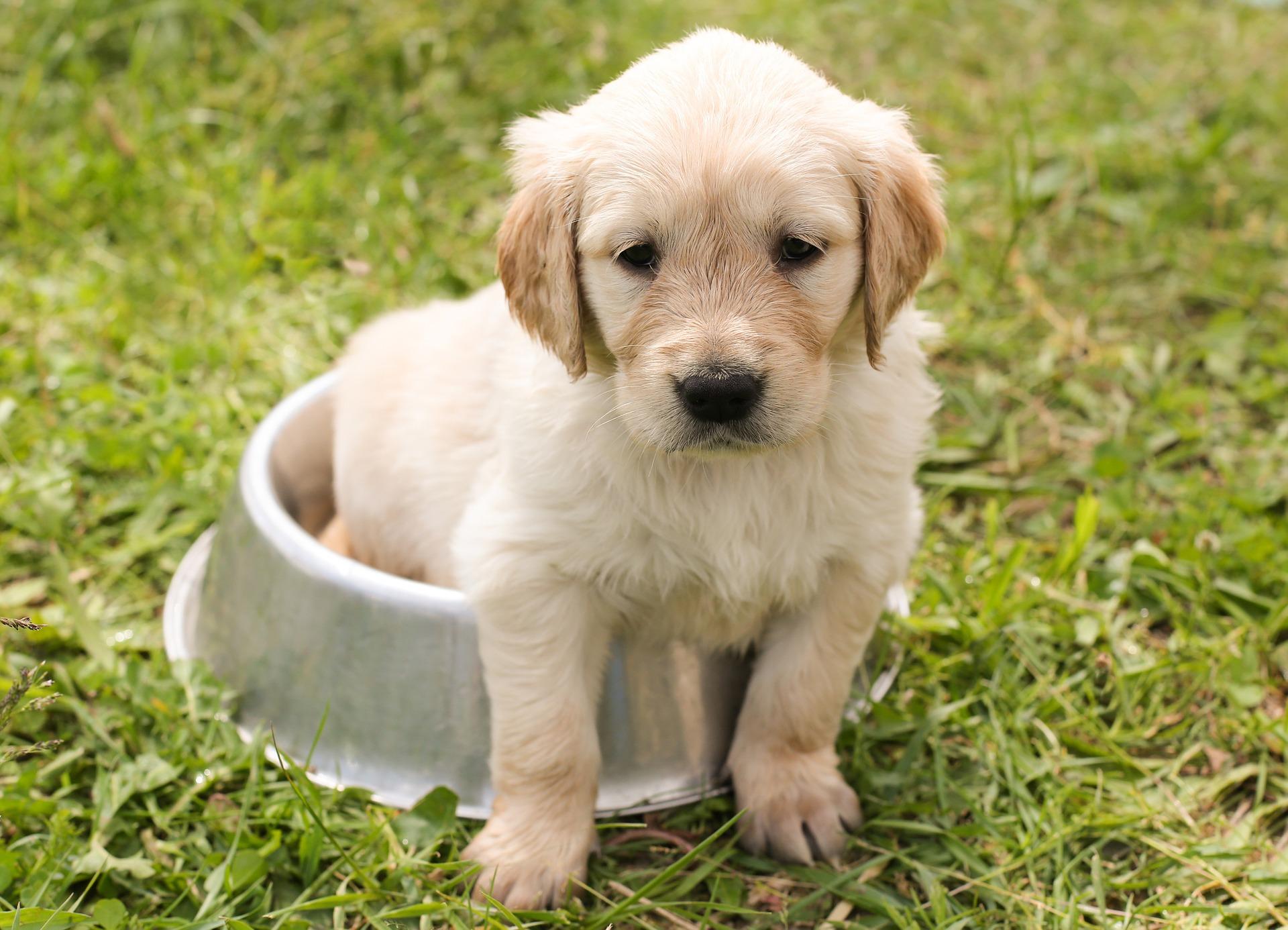 Alimentazione di un cane: quali cibi evitare?