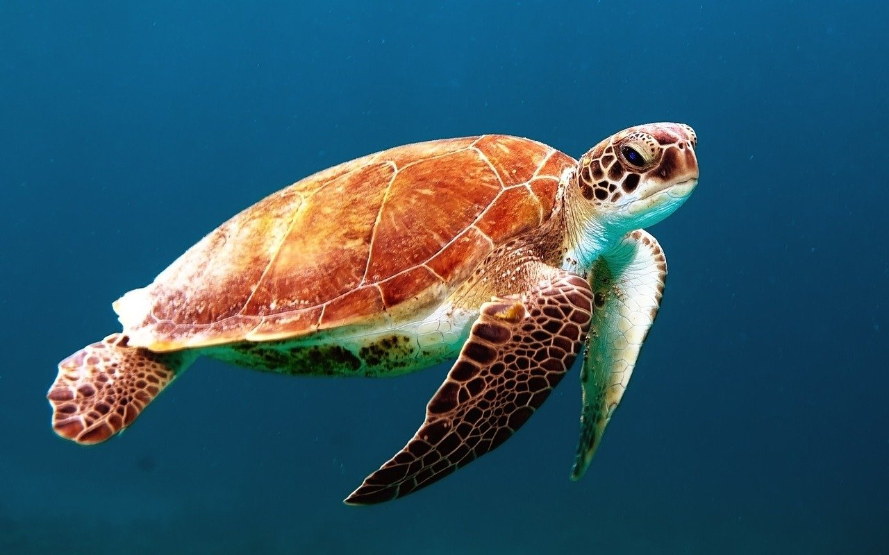 Cosa dar da mangiare ad una tartaruga d'acqua